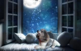 dog waiting for Santa